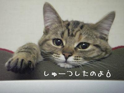 かわいいお友達♪_d0355333_14061079.jpg