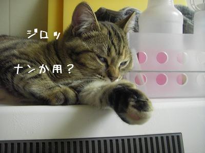 かわいいお友達♪_d0355333_14061184.jpg