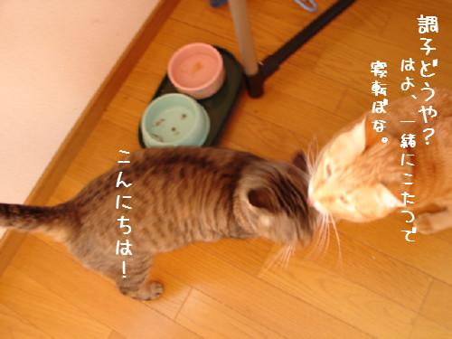 笑子ちゃんの休日_d0355333_14064221.jpg