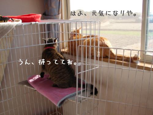 笑子ちゃんの休日_d0355333_14064291.jpg