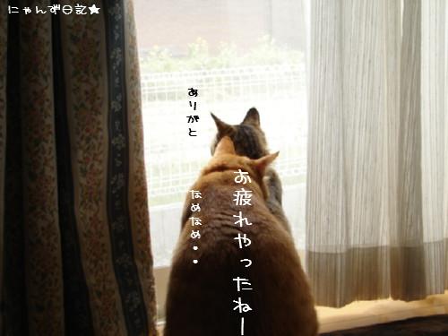 台風一過_d0355333_14081342.jpg