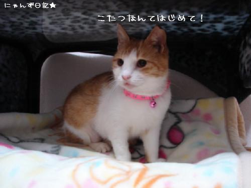 りりちゃん登場_d0355333_14083463.jpg