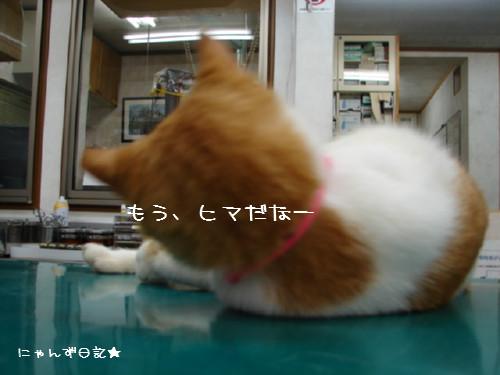 りりちゃん病院2日目_d0355333_14084136.jpg