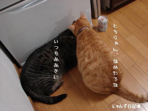とらちゃんの悩み事_d0355333_14092302.jpg