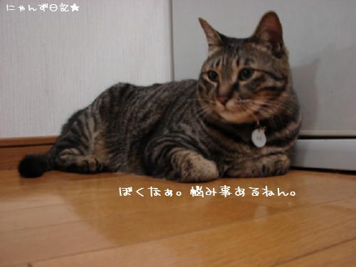 とらちゃんの悩み事_d0355333_14092336.jpg