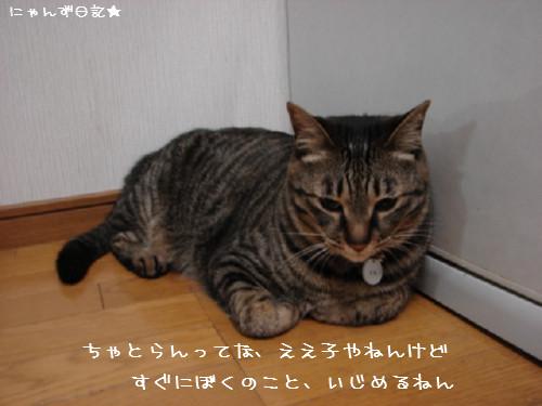 とらちゃんの悩み事_d0355333_14092360.jpg