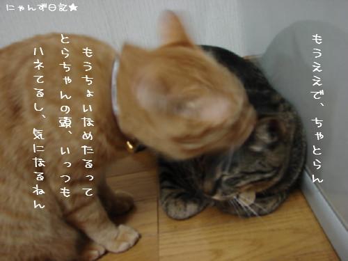 とらちゃんの悩み事_d0355333_14092375.jpg