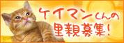 ケイマンくんの里親さん募集開始!_d0355333_14093984.jpg