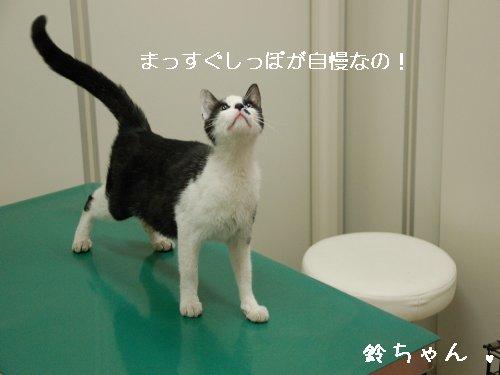 ★鈴ちゃん★_d0355333_14105873.jpg