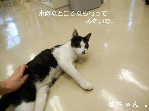 ★鈴ちゃん★_d0355333_14105974.jpg