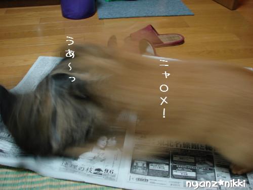 ご飯3粒の恨み_d0355333_14123655.jpeg