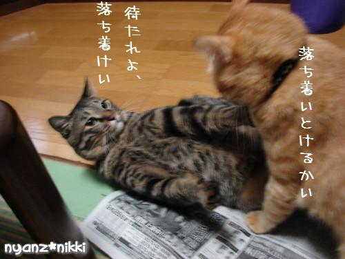 ご飯3粒の恨み_d0355333_14123669.jpeg