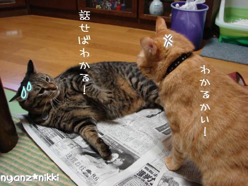 ご飯3粒の恨み_d0355333_14123680.jpeg