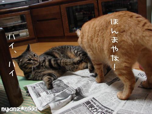 ご飯3粒の恨み_d0355333_14123750.jpeg