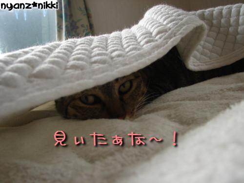 早朝暴走族★化け猫組_d0355333_14124306.jpeg