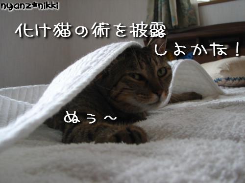 早朝暴走族★化け猫組_d0355333_14124318.jpeg