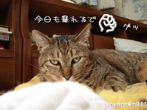 早朝暴走族★化け猫組_d0355333_14124356.jpeg