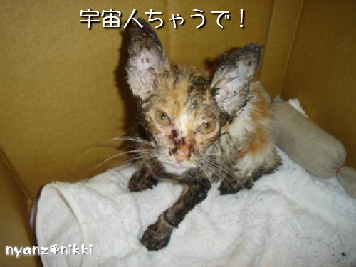 変身★別猫_d0355333_14125608.jpeg