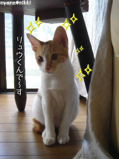 変身★別猫_d0355333_14125617.jpeg