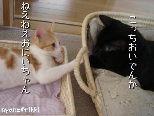 変身★別猫_d0355333_14125664.jpeg
