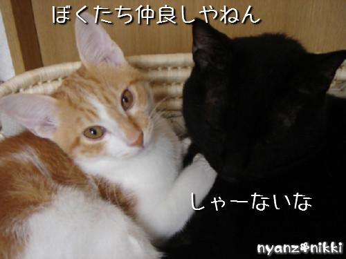 変身★別猫_d0355333_14125756.jpeg