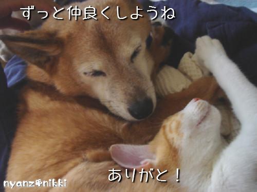 変身★別猫_d0355333_14125802.jpeg