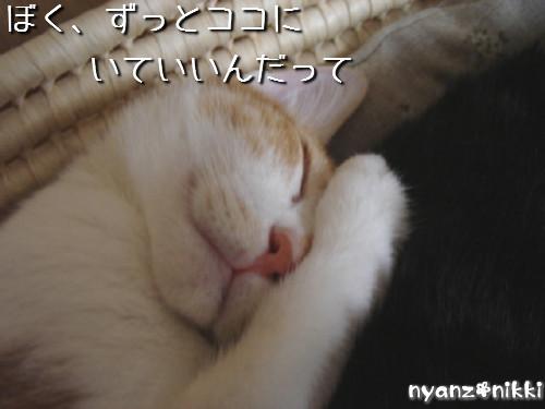 変身★別猫_d0355333_14125865.jpeg