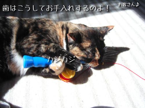 猫も歯が命なので_d0355333_14131129.jpeg