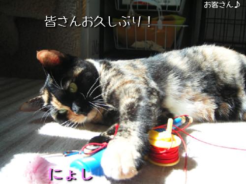 猫も歯が命なので_d0355333_14131137.jpeg