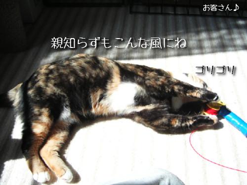 猫も歯が命なので_d0355333_14131201.jpeg