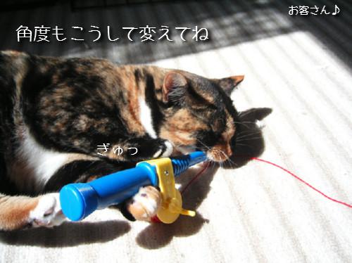 猫も歯が命なので_d0355333_14131255.jpeg