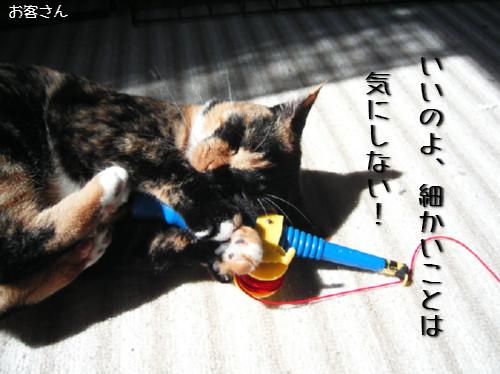 猫も歯が命なので_d0355333_14131258.jpeg