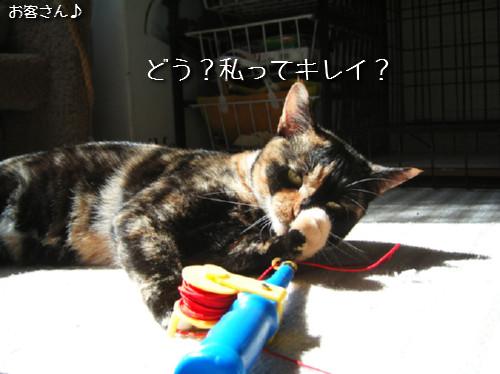 猫も歯が命なので_d0355333_14131388.jpeg