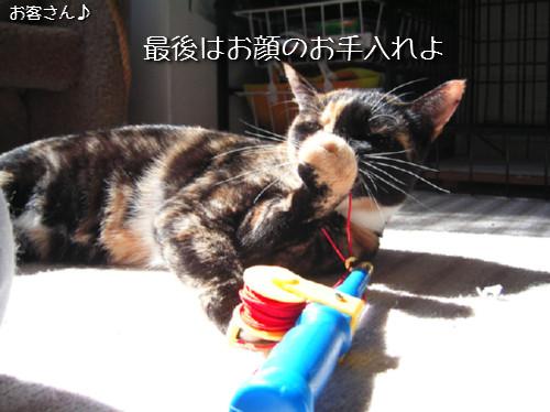 猫も歯が命なので_d0355333_14131393.jpeg