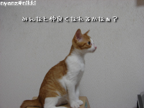 愛桜ちゃんとにゃんずの幸せな生活の秘訣_d0355333_14131465.jpeg