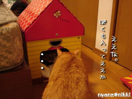 つくつく★新しい猫ハウス_d0355333_14132724.jpeg