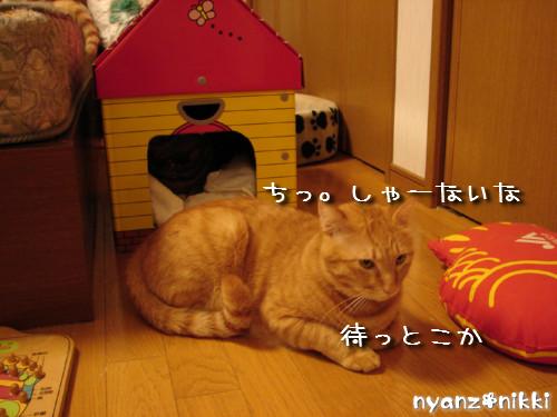 つくつく★新しい猫ハウス_d0355333_14132752.jpeg