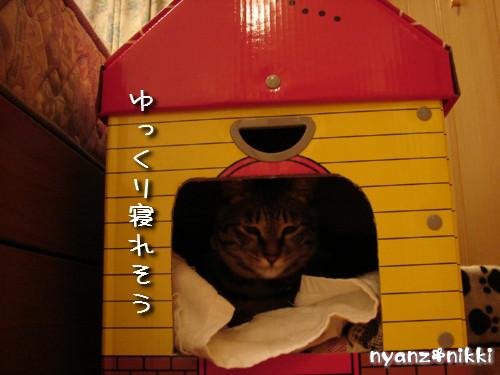 つくつく★新しい猫ハウス_d0355333_14132764.jpeg