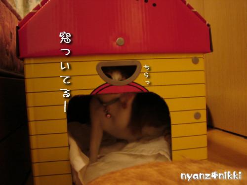 つくつく★新しい猫ハウス_d0355333_14132812.jpeg