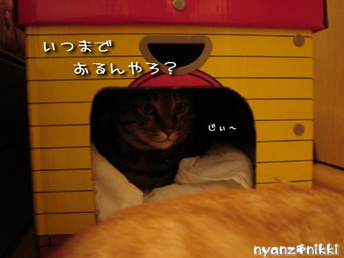 つくつく★新しい猫ハウス_d0355333_14132831.jpeg