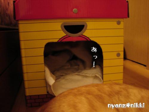 つくつく★新しい猫ハウス_d0355333_14132854.jpeg