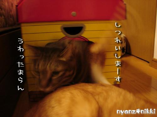 つくつく★新しい猫ハウス_d0355333_14132856.jpeg