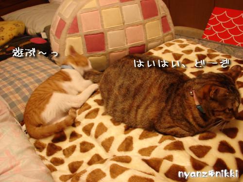 つくつく★新しい猫ハウス_d0355333_14132934.jpeg