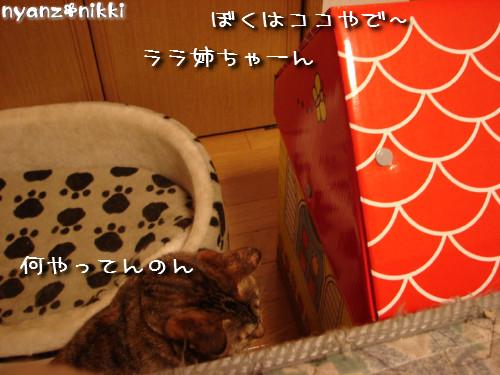 つくつく★新しい猫ハウス_d0355333_14132941.jpeg
