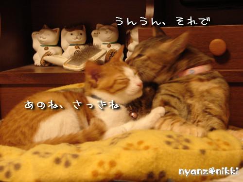 つくつく★新しい猫ハウス_d0355333_14132965.jpeg