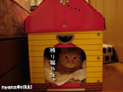 つくつく★新しい猫ハウス_d0355333_14132971.jpeg