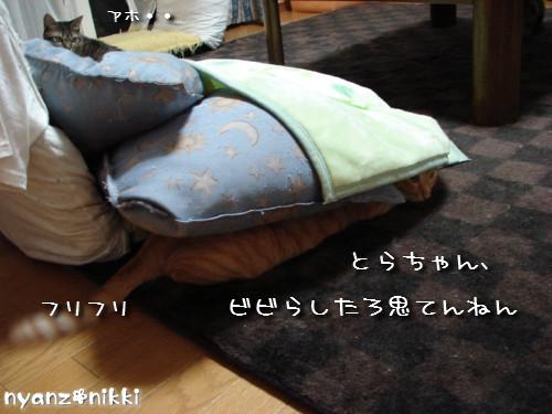 とらちゃんと面会_d0355333_14142446.jpeg