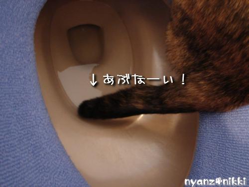 秋色おトイレ_d0355333_14143159.jpeg