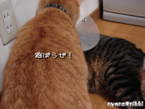 ボジョレー&とらちゃんのヒミツ初公開♪_d0355333_14143458.jpeg