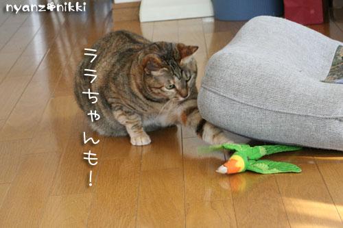ゆうたママnicoさんがやってきた★_d0355333_14154424.jpg